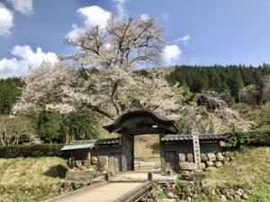福井の朝倉遺跡1