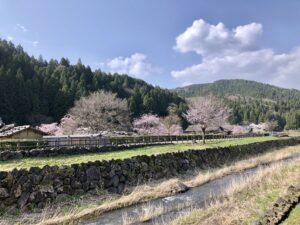 福井の朝倉遺跡2